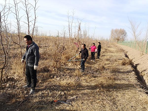 敦煌市郭家堡镇:春耕行动早 修剪绿化树